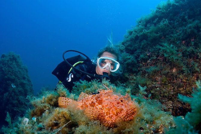 Diving in Santa Ponsa for certified divers photo 10
