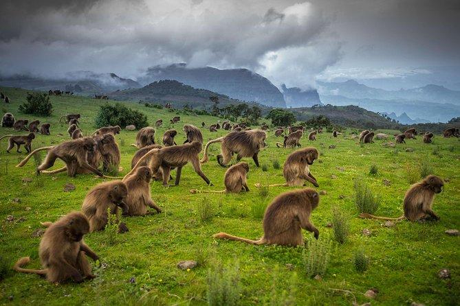 4-Day Simien Mountains Trek
