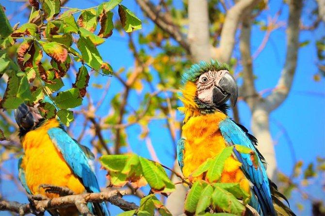 Birdwatching National aviary cartagena de indias
