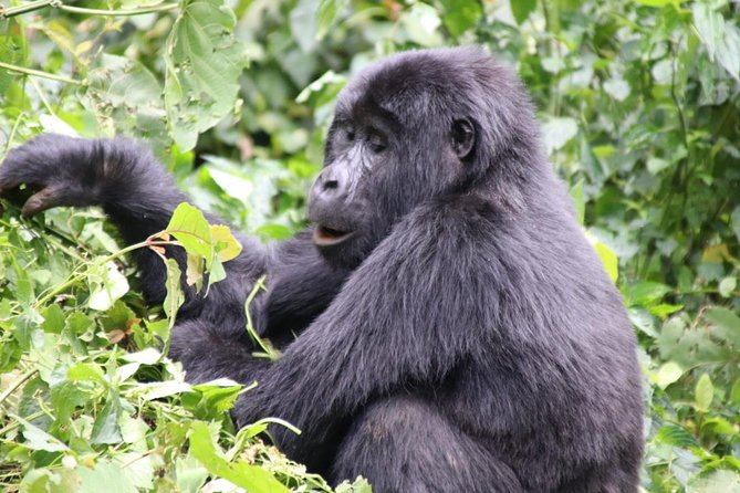 3 Day Kalinzu Forest Chimpanzee Trek and Gorilla Trekking photo 1