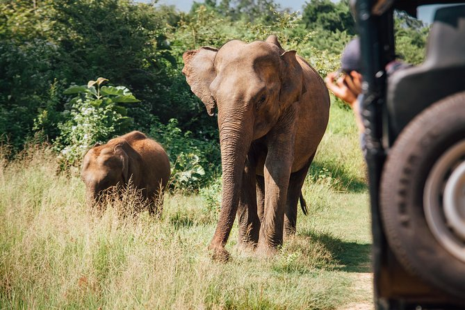 Private Tour: Udawalawe National Park Safari photo 4