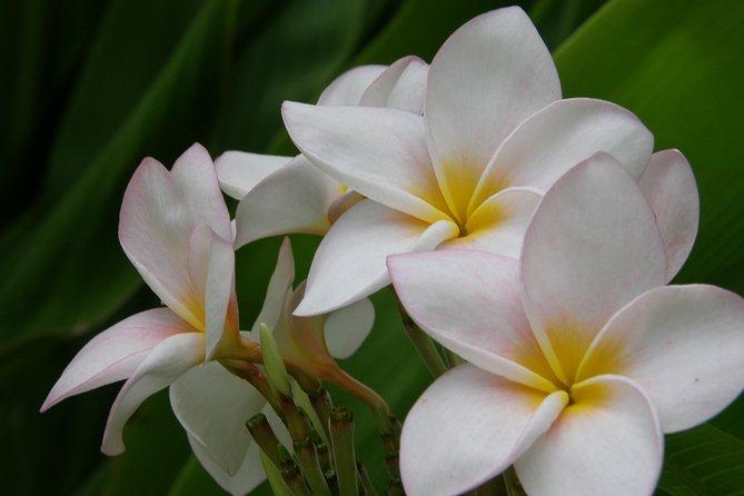 Barbados Flora & Fauna
