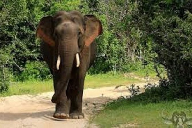 Visit Sri Lanka Budget Sri Lanka