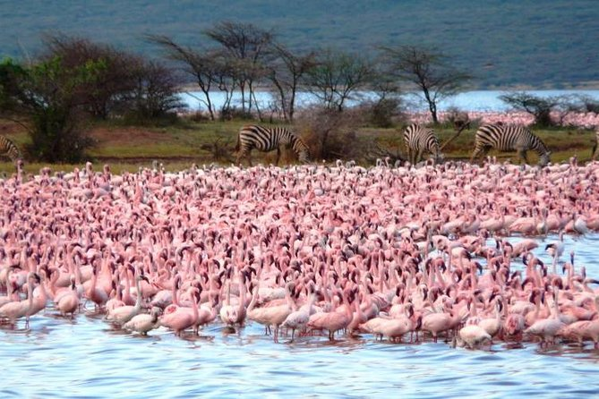 Lake Bogoria park day guided tour from Nairobi