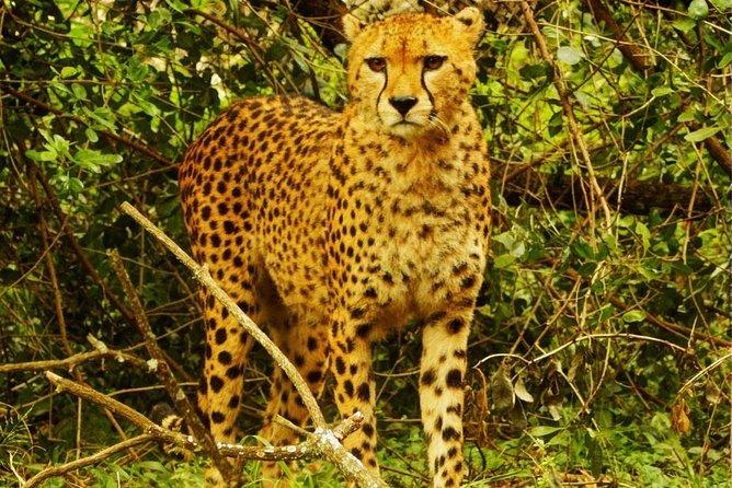 Half day guided tour to Nairobi safari walk