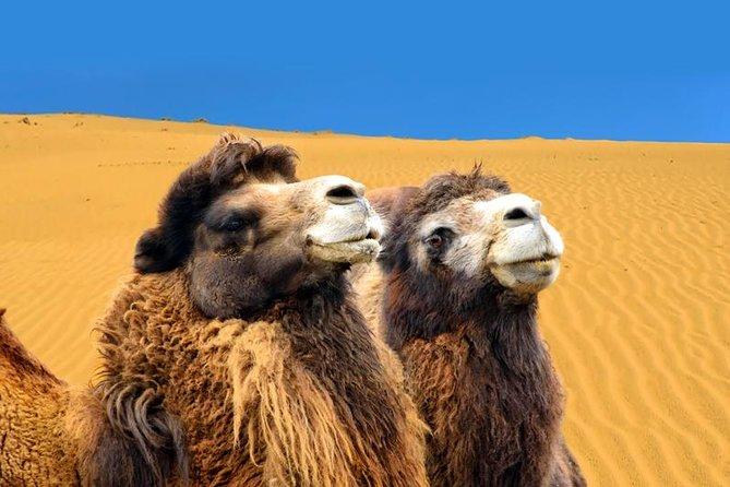 Amazing Gobi Desert