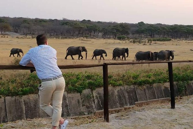 Hwange 3 day Safari