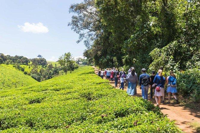 Private day tour to Kiambethu Tea farm in LIMURU