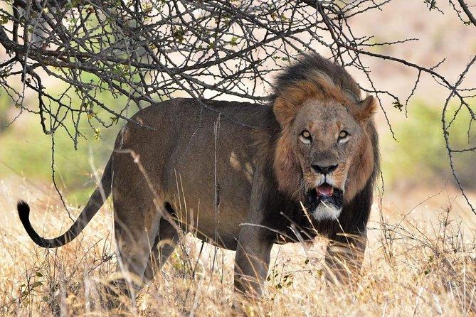 3 Days Masai Mara Guided safari from Nairobi