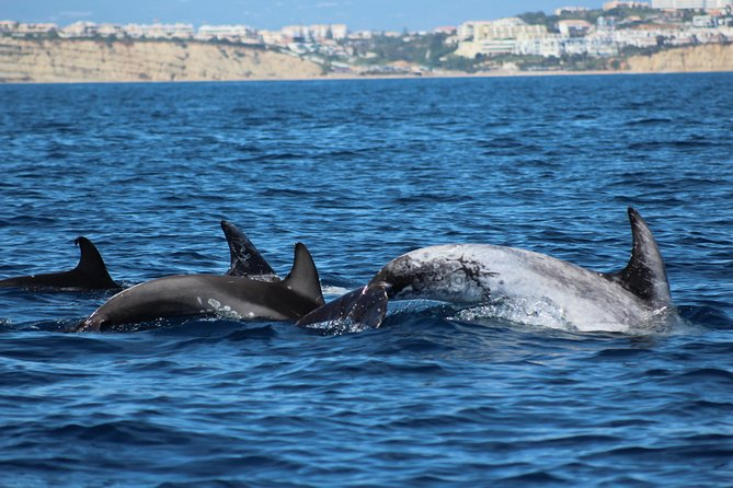 Lagos - Dolphin Watching Seafaris