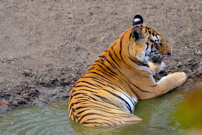 Wild life tour in Chennai with guide and private car