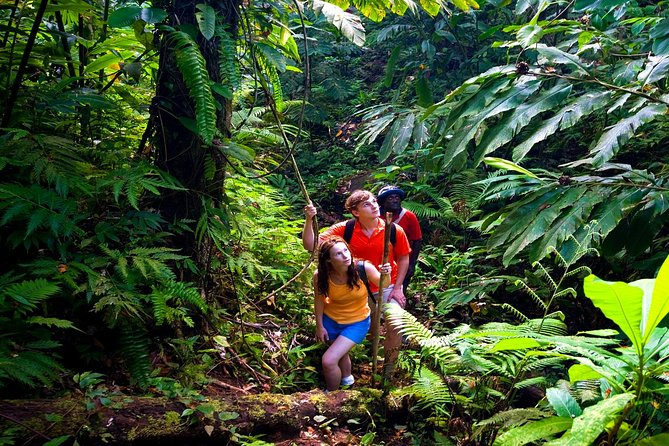Waterfall Hike & Rainforest Adventure: Exclusive Location,Voted Best Of Maui!
