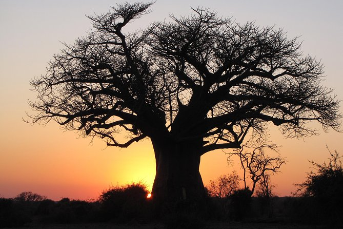 Home Of The Baobab