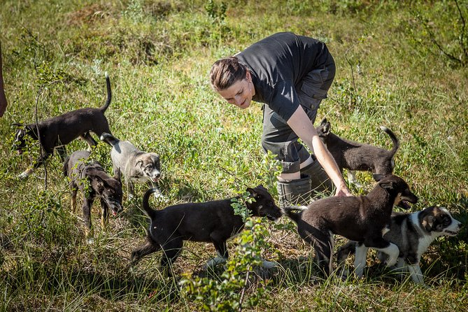 Puppytraining op huskyboerderij in Tromsø