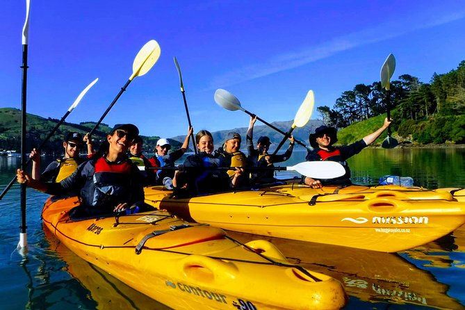Small group guided sea kayaking in Akaroa marine reserve