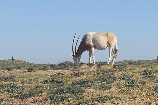 Souss Massa National Park bezoek vanuit Agadir