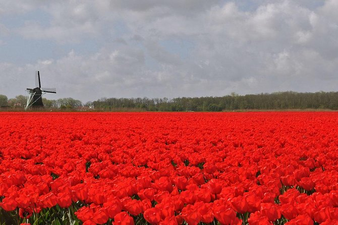 Experiencewaterland safari The Largest tulip fields of the world