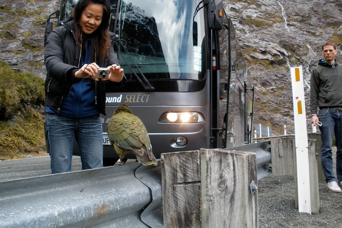 Luxury Milford Sound Coach & Scenic Cruise