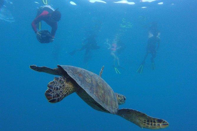 AVA Passage Snorkel Tour