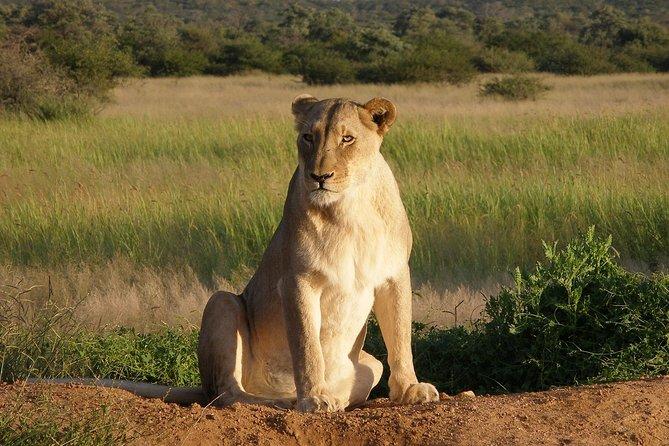 4 Days Serengeti & Ngorongoro Budget Camping Safari
