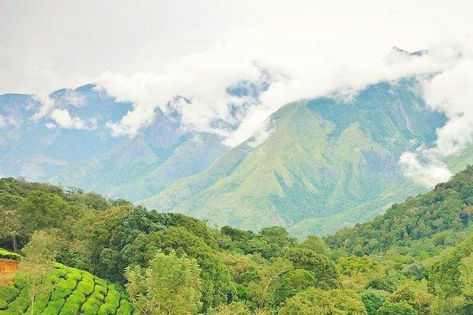 Trek to Top Station, Munnar Kurangani Hills