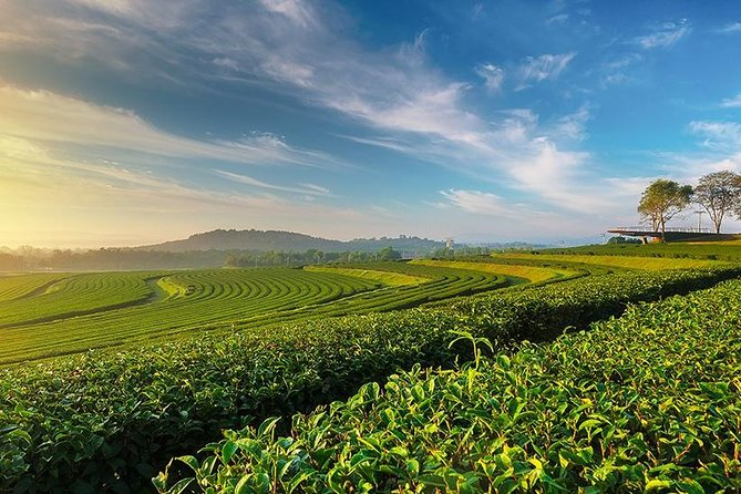 1 Day Trip White Temple - Tea Plantation - Longneck - Cruise to Laos Market photo 10