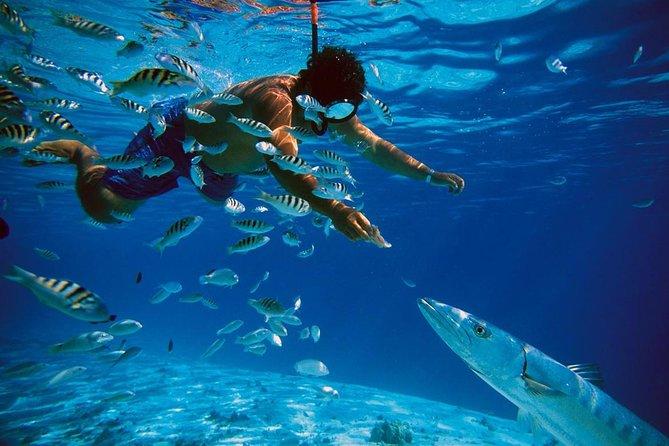 Snorkeling in Bentota