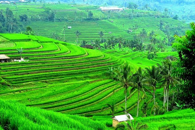 Bali Green Tour Package