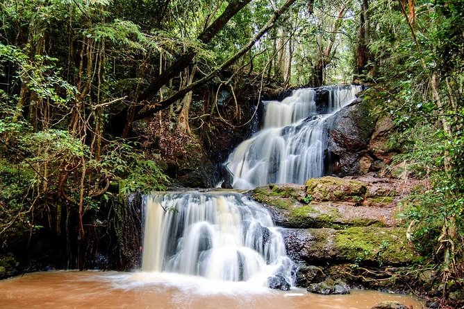Karura Forest Hike Trail Bike & Nature Walk Nairobi Day Tour