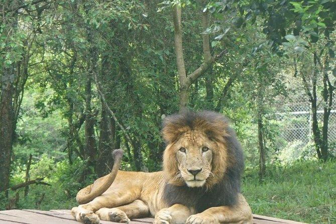 Nairobi day tour animal orphanage,safari walk and Bomas of Kenya