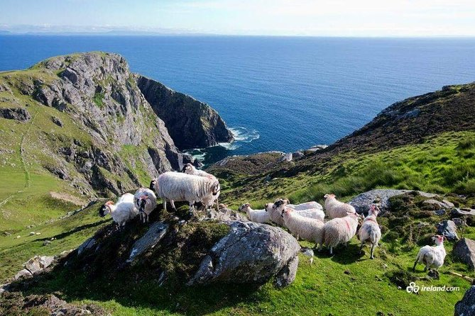 Ring of Kerry & Skellig Ring Private Day Tour