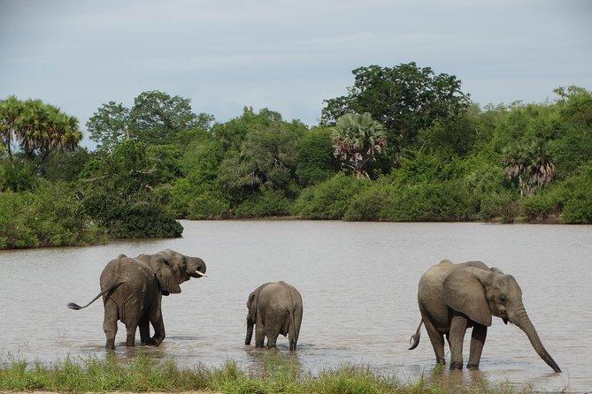 5 Days Get Wild-Nyerere NP (formerly Selous GR) & Mikumi NP Camping Safari