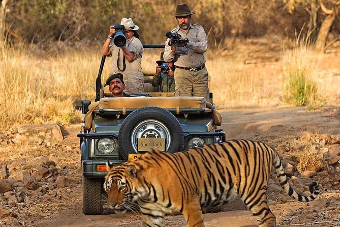 5 Days Ranthambhore Tiger Tour of Delhi, Agra, and Jaipur with 5 Star Hotel
