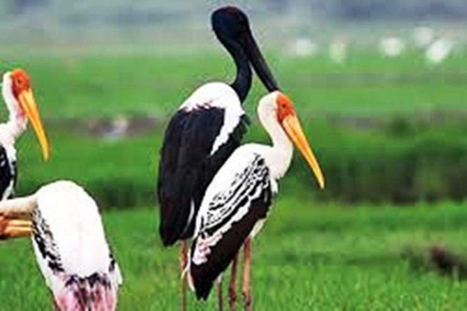 Full Day Bharatpur Bird Sanctuary with Fatehpur Sikri