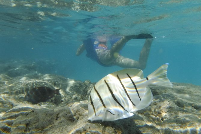 Excursion de plongée en apnée dans la baie d'Hanauma
