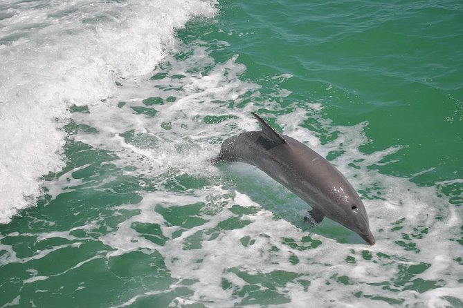 Clearwater Beach Day Trip from Orlando with Dolphin Encounter Cruise photo 6