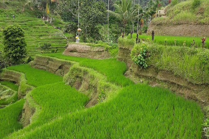 Ubud One Day Private Tour