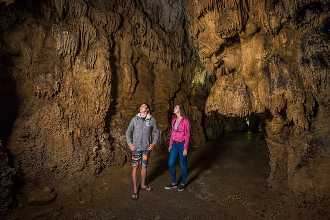 Auckland to Rotorua via Waitomo Caves Small Group Tour (One Way)