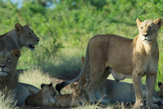 4 days safari to maasai mara game reserve