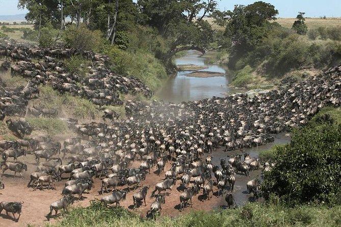 4 Days Masai Mara,Lake Nakuru Group joining Safari