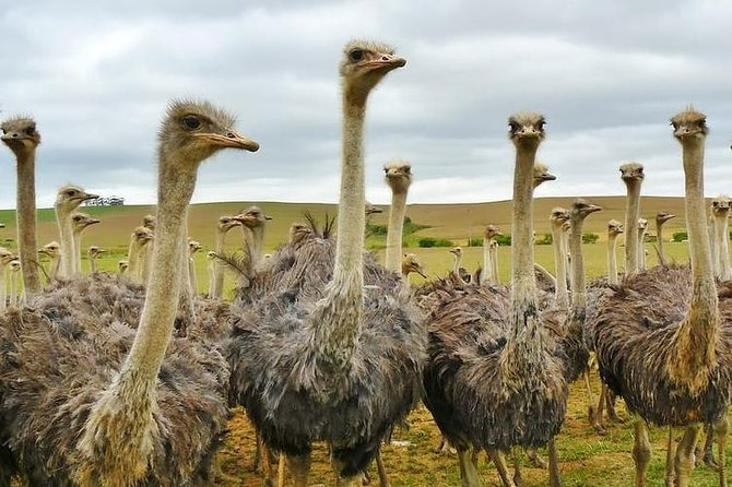 Day guided tour to Masai Ostrich farm from Nairobi