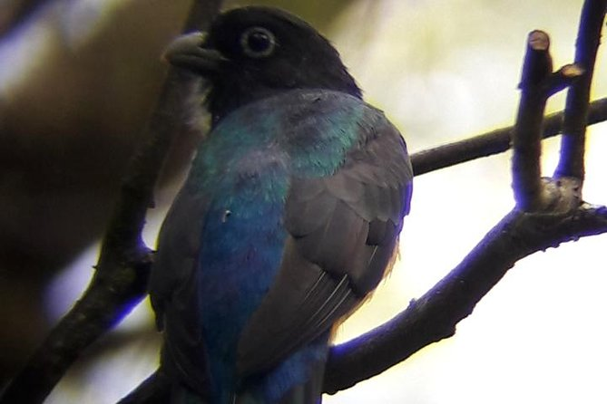 Bird Watching Montibelli