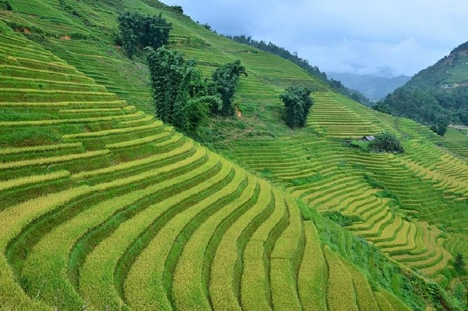 Sapa Trekking Tour with Local full Package by Bus 3N2D photo 13