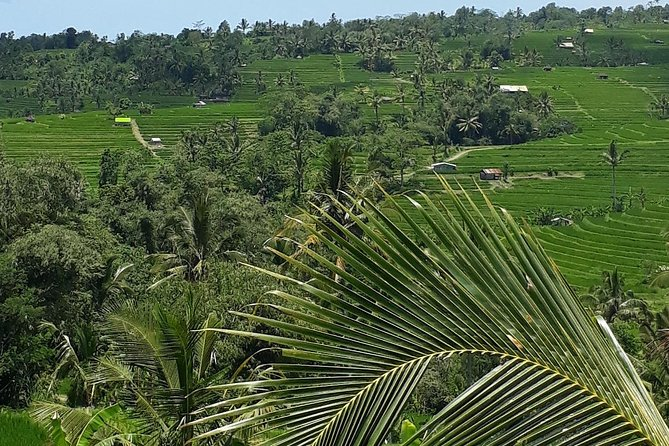 Private Tour Rice Terrace And Best Waterfall Bali