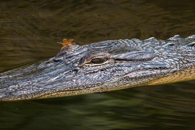 Nawlins Luxury Pontoon Boat Swamp Tour