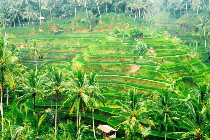 Bali Car Charter - Half Day Ubud Village Tour