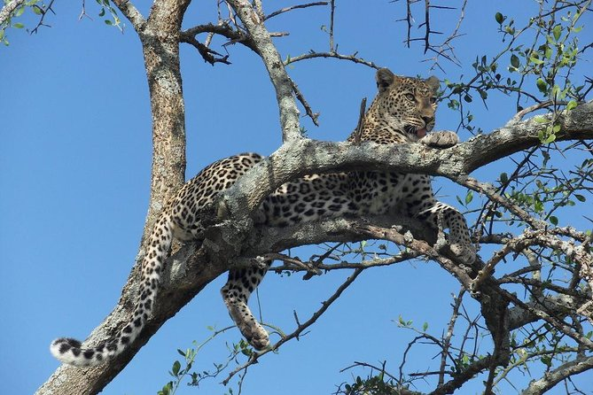 5 Day Serengeti, Tarangire, & Ngorongoro & Manyara Grass Root Safari. photo 3