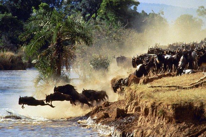 8 days, 7 nights Kenya and Tanzania private lodging safari