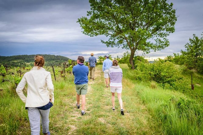 Foraging in Provence