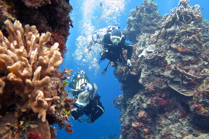 Discover Scuba Diving PADI in Playa del Carmen photo 11